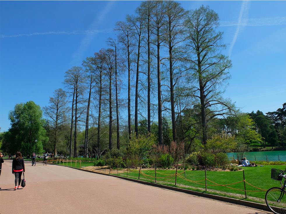 Prise de vue du Parc Tête D'Or à Lyon