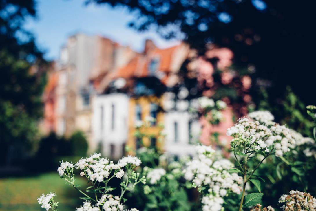 Prise de vue de plantes à Lille