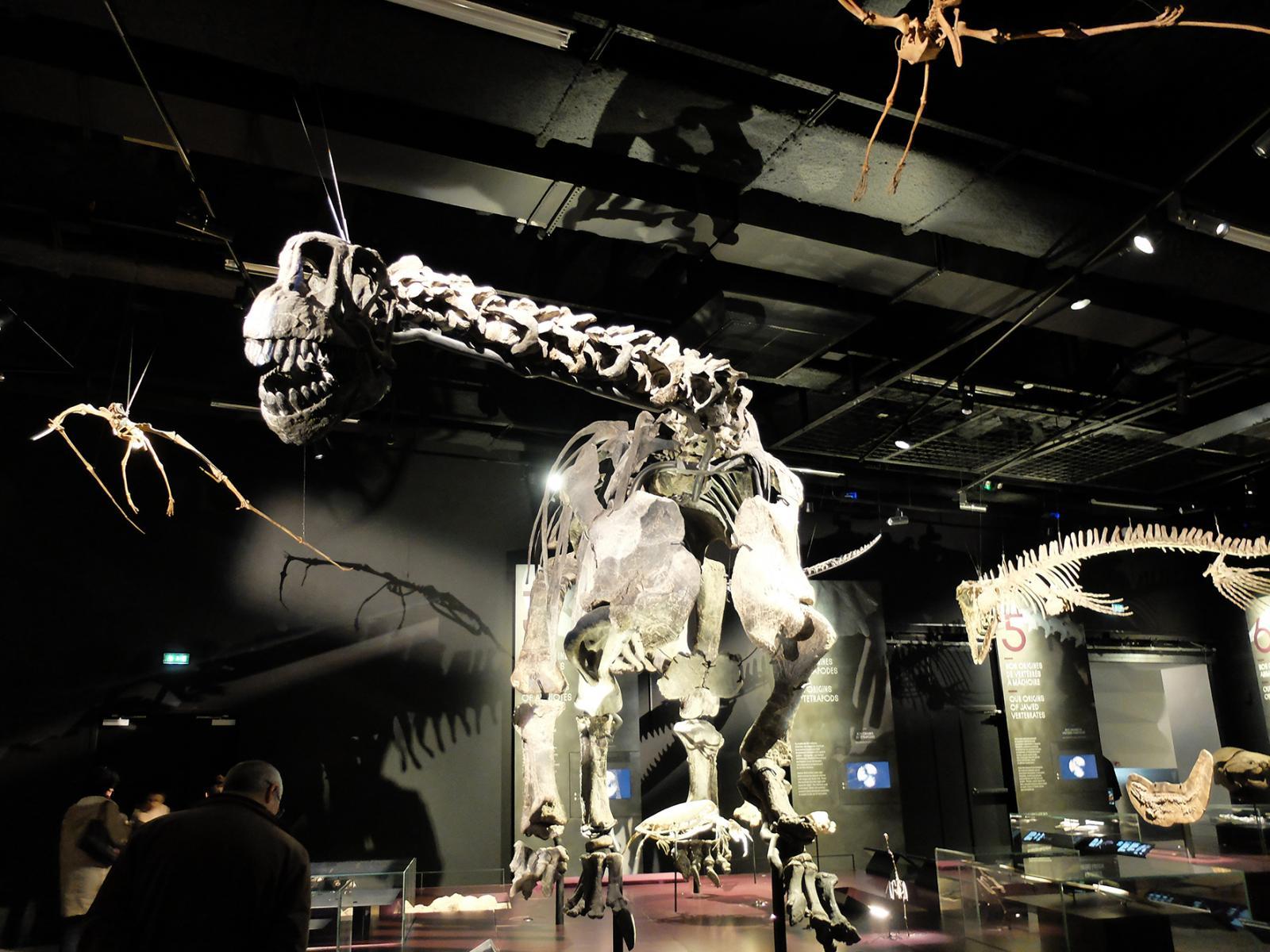 Prise de vue de l'intérieur du Musée des Confluences à Lyon