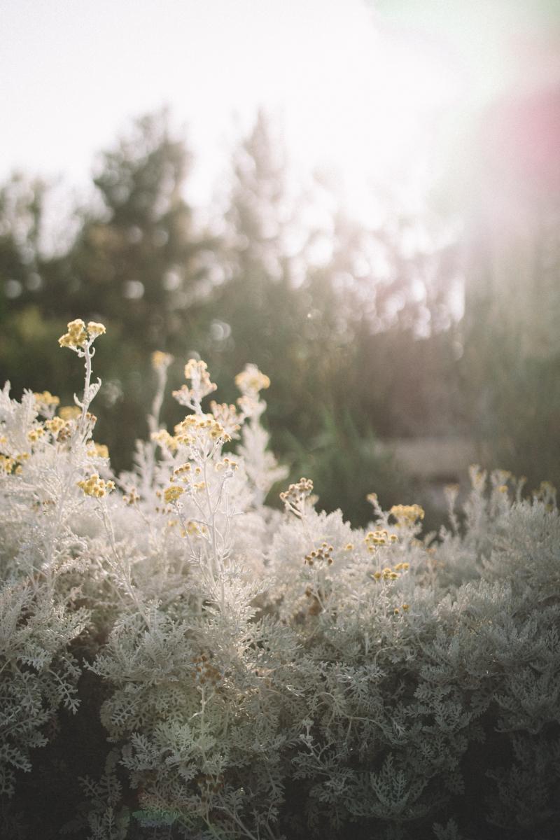 plante du jardin de la Fontaine